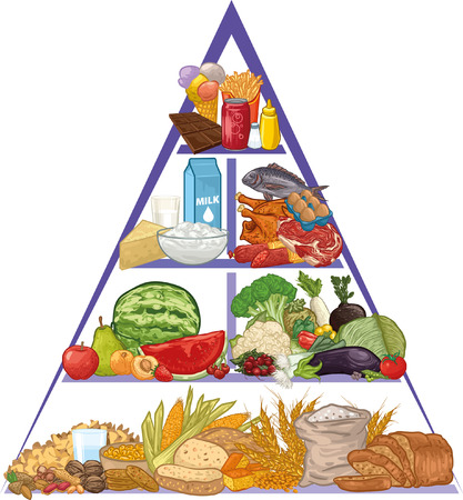 of food: Food pyramid Illustration