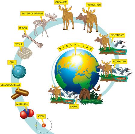 Niveles de organización de la vida silvestre en la Tierra. Ilustración de vector
