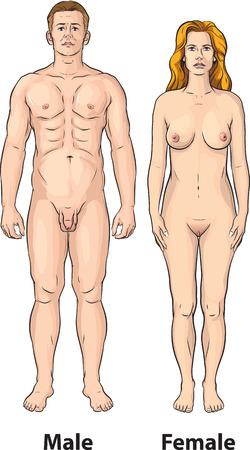 donna nudo: Postura del corpo maschile e femminile. Vettoriali
