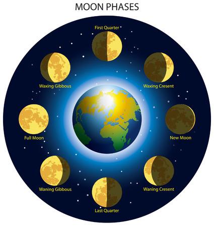 noche luna: Fases b�sicas de la luna. Vectores