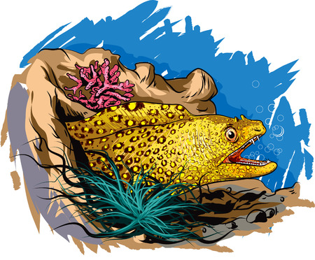 snake head fish: Vector illustration of jeweled moray eel.