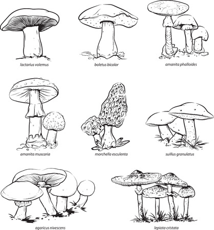 Vector illustration of collection of mushrooms for coloring.