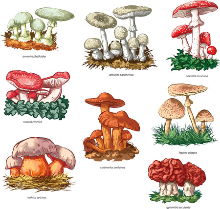 Vector collection of poisonous mushrooms.