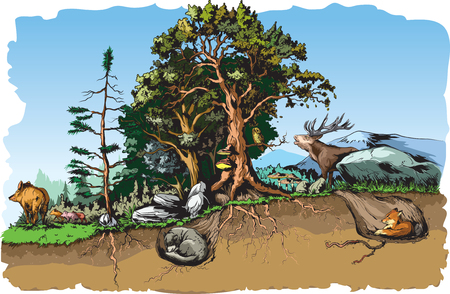 Animals forest habitat