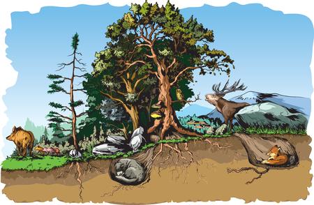 habitat: Animals forest habitat