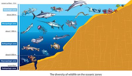 Las capas del océano Vectores