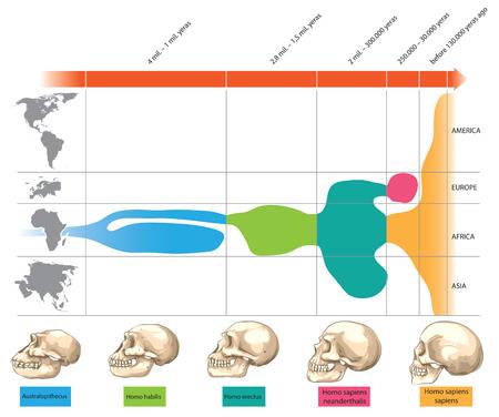 Cronología de la evolución cráneo humano