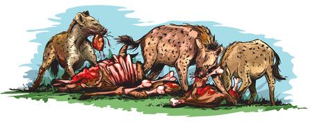 Hyenas eating