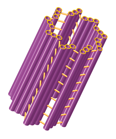 eukaryotic: Cylindrical cell structure of centriole.