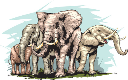 herd: An Elephants herd. Illustration