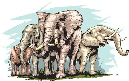 reserve: An Elephants herd. Illustration