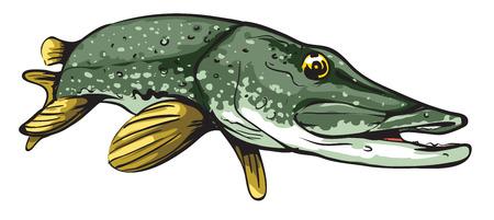 Pike Fisch Standard-Bild - 91320361