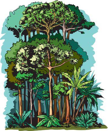 Rain forest height layers Illustration