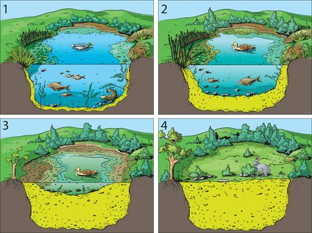 Illustration of four basic stages community succession in an open pond or swamp. Illustration
