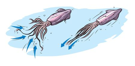 Illustration basic principle of squid movement. Stock Illustratie