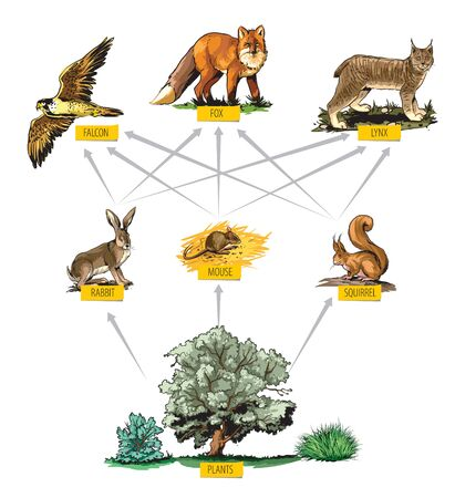 Illustrated example of food chain in forest.