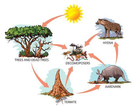 Vector illustration of food chain: sun, trees, termites, aardvark, hyena.