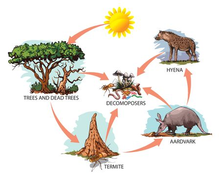 Vector illustration of food chain: sun, trees, termites, aardvark, hyena.