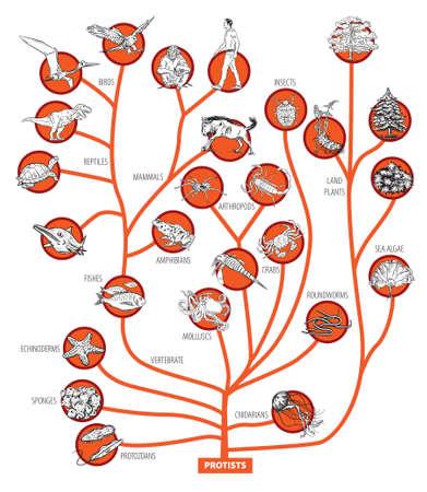 Illustration of evolution tree of living beings.