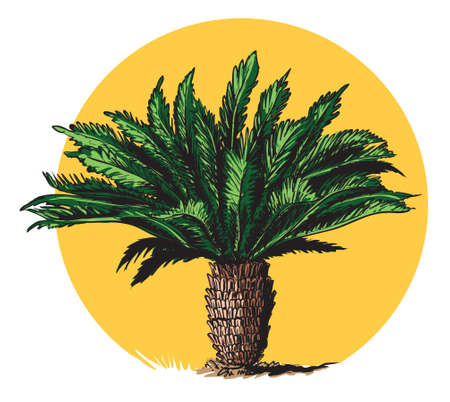 Illustration shows cycad ancient palm tree, with very long fossil history.