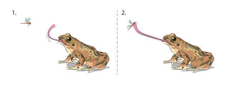 Illustration shows how the Frog catching insect with a sticky tongue. Иллюстрация