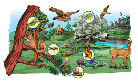 Illustration of food chain in forest for school excersise.