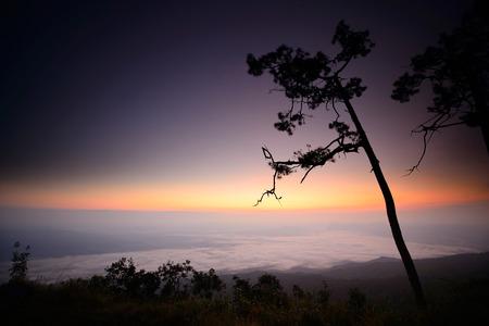 phukradueng: Dawn and goldenlight  at Phukradueng National Park of Thailand.
