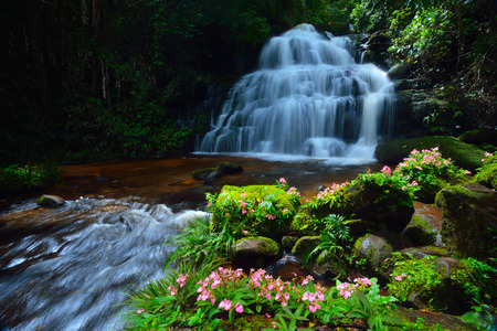 water fall: Mun Dang waterfall and dragonflowers its waterfall in the rainforest in Thailand. Stock Photo