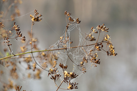wood spider: Spider webs on dry wood