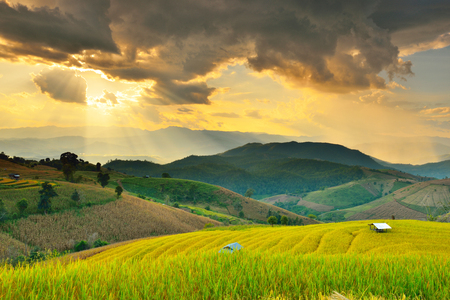 chaingmai: Golden rice fields in the countryside of Thailand The beautiful sunset at Terraced Paddy Field in Mae-Jam Village , Chaingmai Province of Thailand Fresh terrace rice field over the mountain range and beautiful sunset Stock Photo
