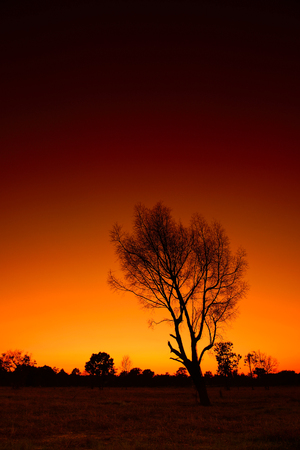 yello: Dead tree with shiny light Twilight Stock Photo