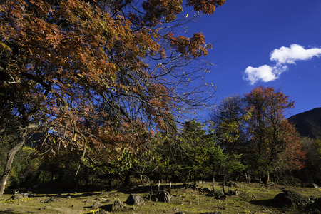 fall protection: Mountain deciduous forests