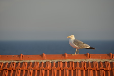 sanremo: SEAGULL ON THE ROOF Stock Photo