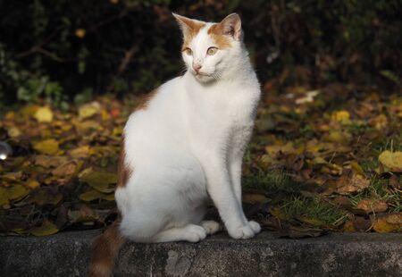 A nice cat portrait