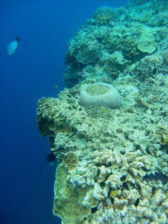pristine corals: The Great Barrier Reef- Australia