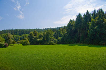 Greenwood landscape Stock Photo - 8292190