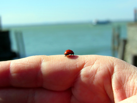 Ladybug on a woman hand in front of the lake photo