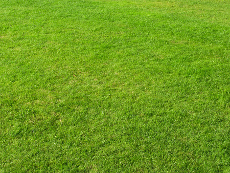 cricket field: Close up of green grass field Stock Photo