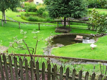 Green garden with pond and swan Standard-Bild