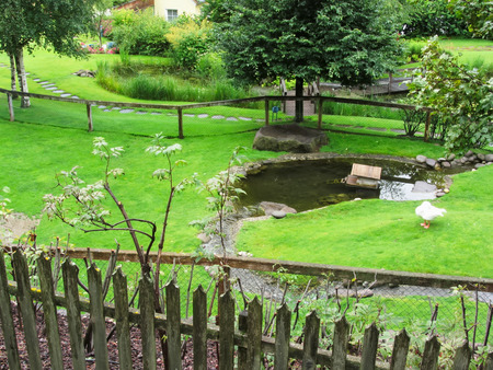back yard pond: Green garden with pond and swan Stock Photo