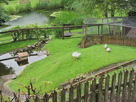 back yard pond: Green garden with pond, swan and rabbits
