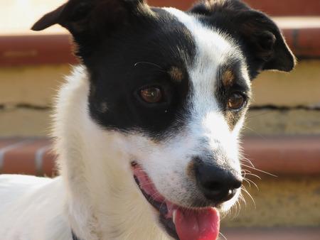 dreamy: Dreamy dog puppy closeup