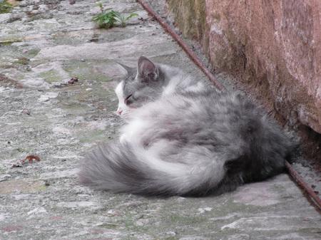 crouch: Fluffy cat sleeping crouch on the floor