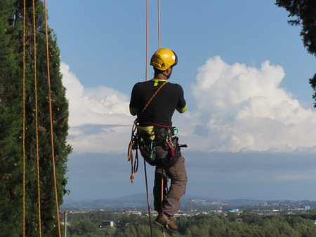 climbing cable: Tree surgeon lumberjack hanging from a big tree