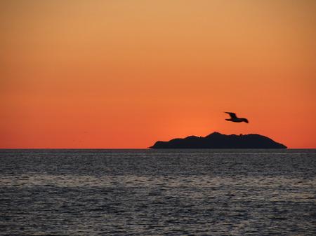 livorno: Beautiful sea sunset with island silhouette panorama . View of Gorgona island from Livorno city . Tuscany, Italy