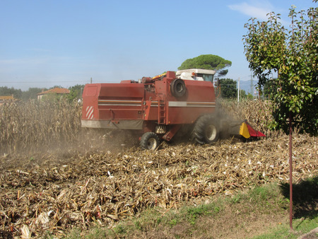 Combine harvesting corn crop in the cultivated field Stock Photo
