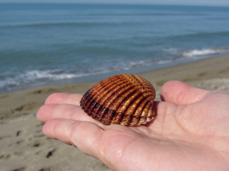 Woman hand palm with brown sea shell on summer beach background