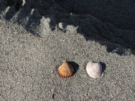 Two seashells on sand. Summer beach background. Top view Stock Photo