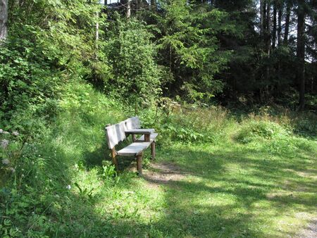 Empty wooden bench for rest in the forest Standard-Bild