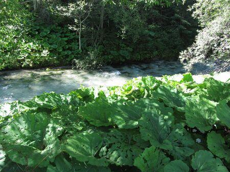 The vegetation of running waters . Torrent in the woods Standard-Bild